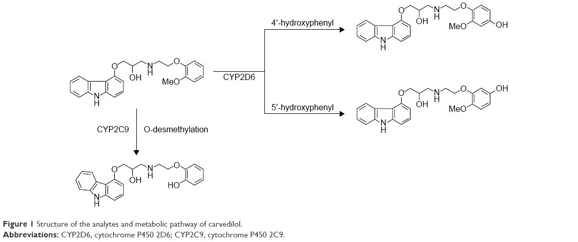 genetic polymorphism governing the cyp2d6 cytrochrome Personalized genome, current status, and the  and the future of pharmacogenomics which  genetic-polymorphism-governing-the-cyp2d6-cytrochrome-p450.