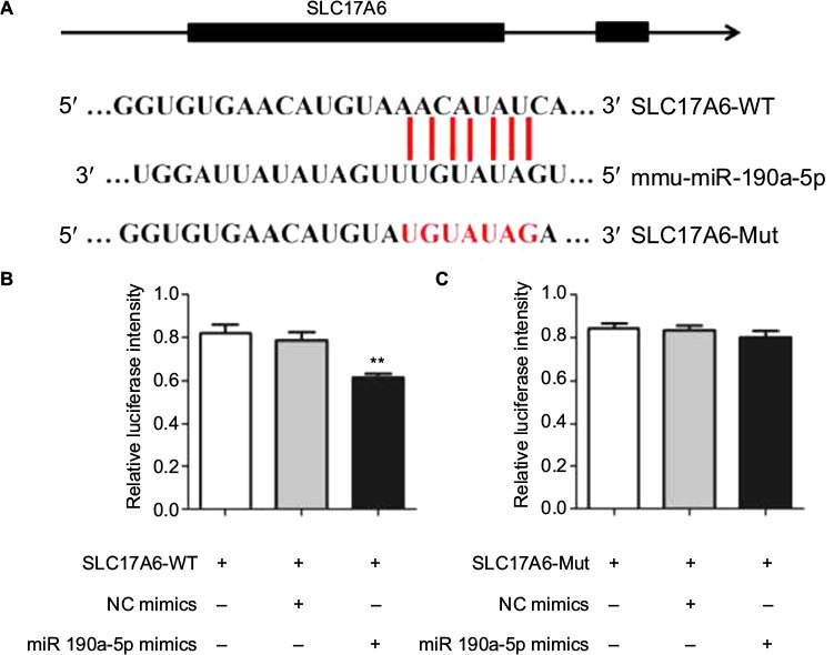 Full text] The role of miR-190a-5p contributes to diabetic