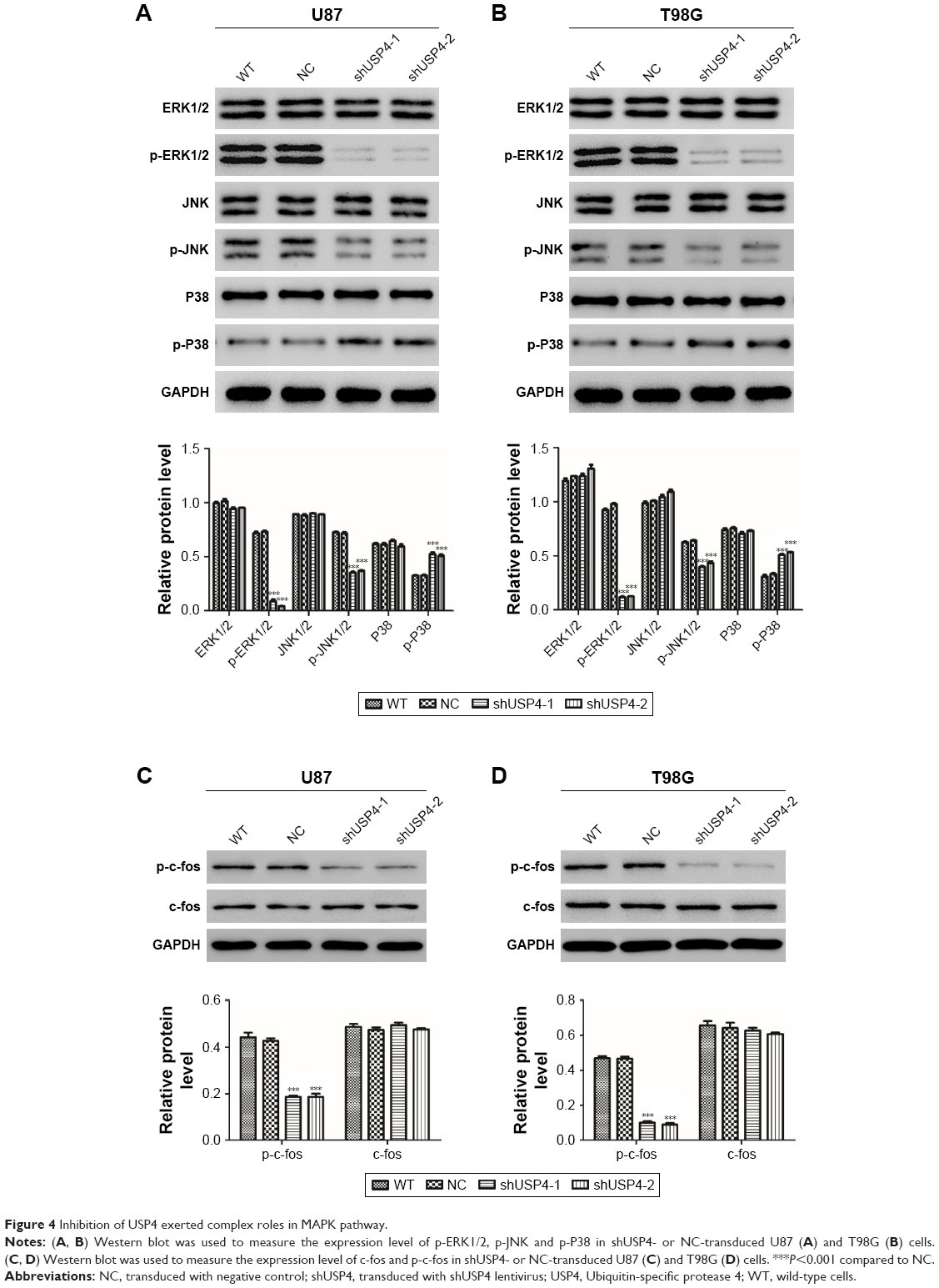 Full text] Ubiquitin-specific protease 4 promotes