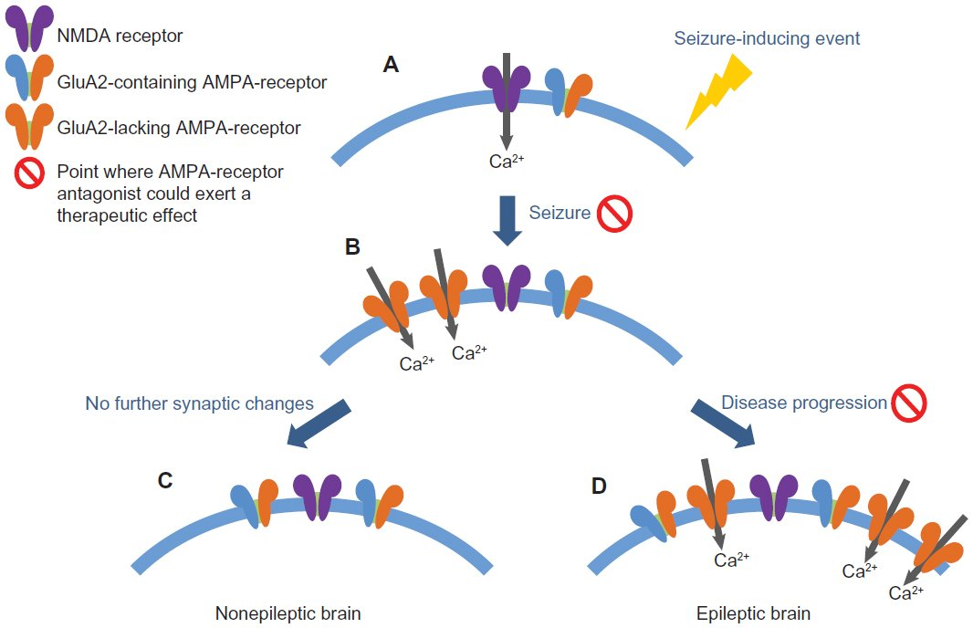 Full Text The Ampa Receptor As A Therapeutic Target In