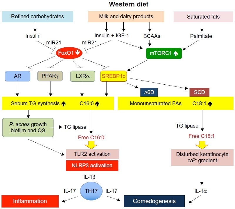sterol and steroid biosynthesis and metabolism in plants and microorganisms
