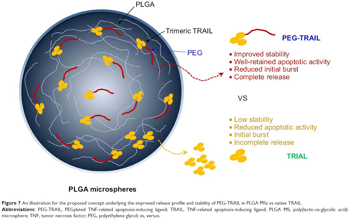 Full Text Pegylated Apoptotic Protein Loaded Plga