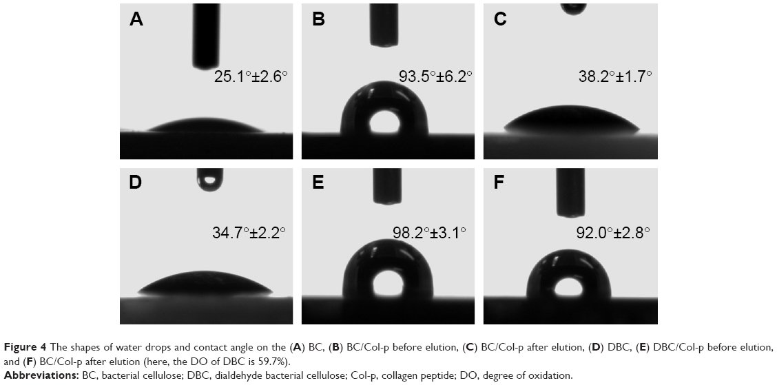 [Full text] Immobilization of collagen peptide on ...