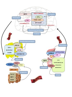 Full Text Drug Development Strategies For The Treatment Of Obesity